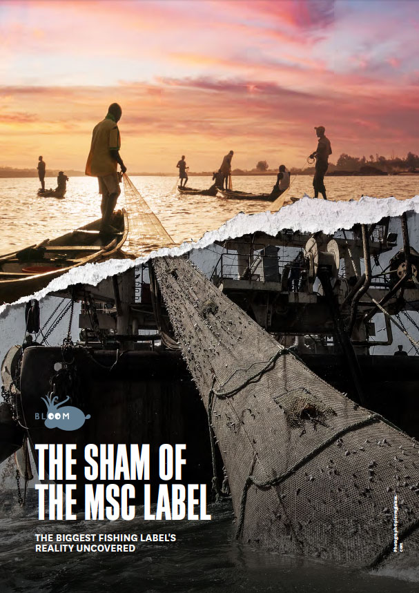 The sham of the MSC